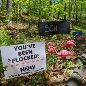 """""""you've been flocked"""" sign and plastic pink flamingos in a front yard"""