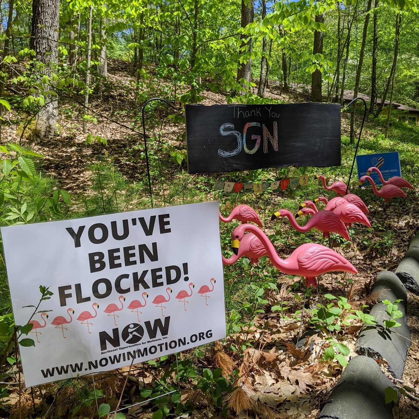 """you've been flocked"" sign and plastic pink flamingos in a front yard"