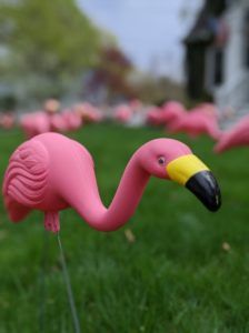 plastic pink flamingo in a yard